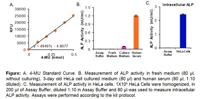 alkaline phosphatase essay Total serum alkaline phosphatase and urinary pyridinoline are 2 of the most important lab tests for diagnosis of paget disease(chaffins) studies have demonstrated that there is a direct association between progression of the disease and the level of certain biochemical markers.