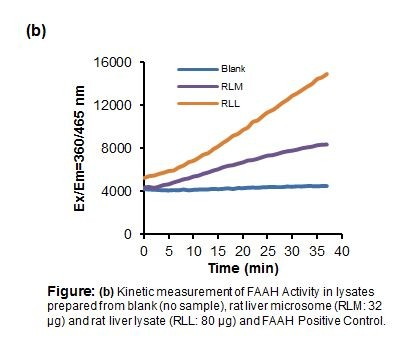 Fatty Acid Amide Hydrolase (FAAH) Activity Assay Kit (Fluorometric