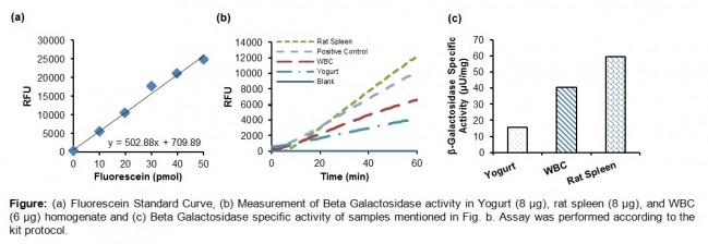 beta galactosidase report