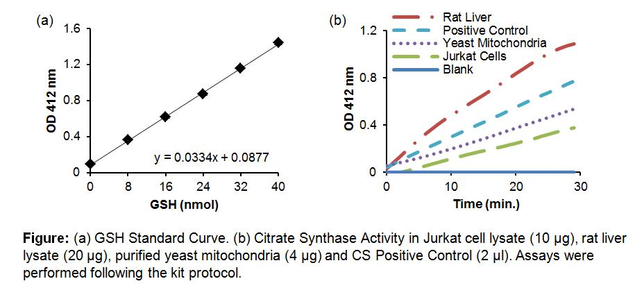 Citrate Synthase Activity Colorimetric Assay Kit
