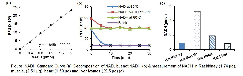 PicoProbe™ NADH Fluorometric Assay Kit
