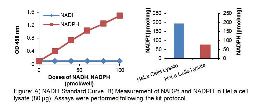 NADP/NADPH Quantitation Colorimetric Kit