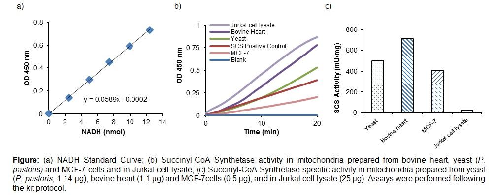 Succinyl-CoA Synthetase Activity Colorimetric Assay Kit