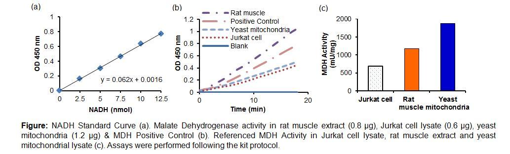 Malate Dehydrogenase Activity Colorimetric Assay Kit