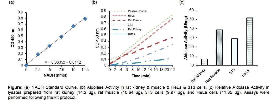 Aldolase Activity Colorimetric Assay Kit