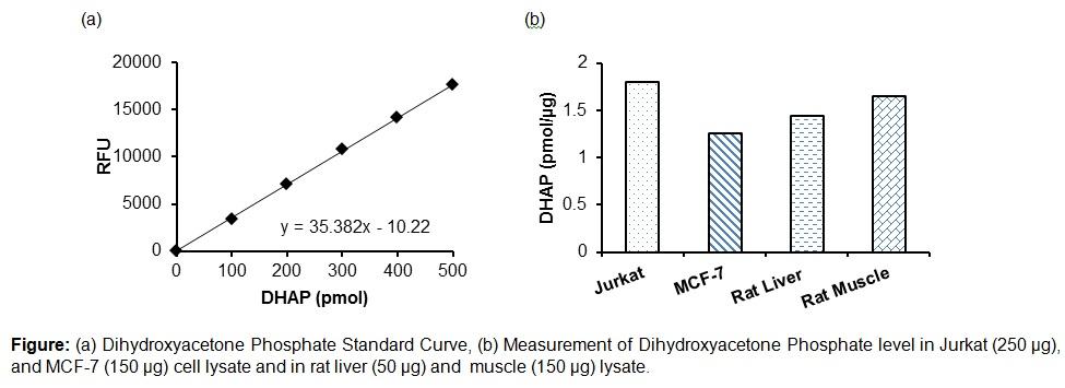 PicoProbe™ Dihydroxyacetone Phosphate (DHAP) Fluorometric Assay Kit
