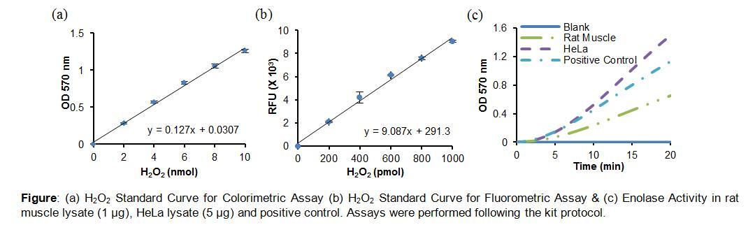 Enolase Activity Colorimetric/Fluorometric Assay Kit