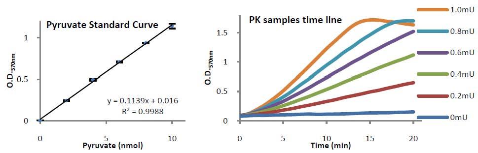 Pyruvate Kinase Activity Colorimetric/Fluorometric Assay Kit