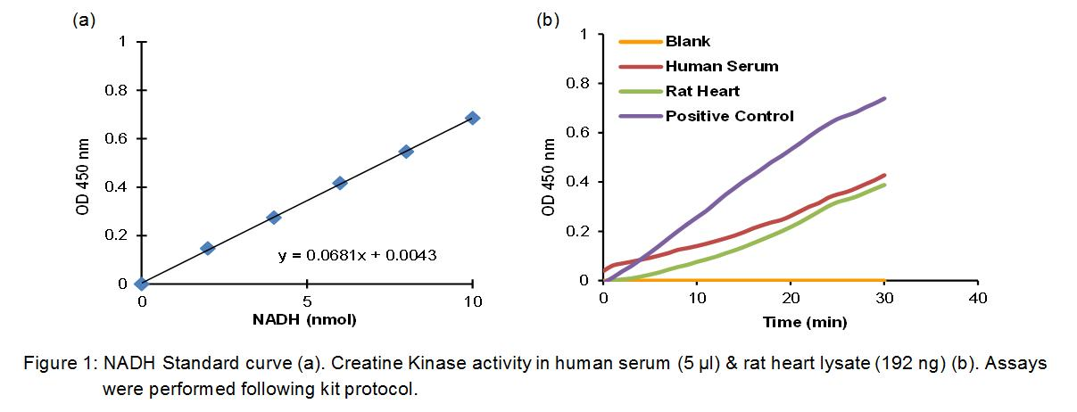 Creatine Kinase (CK) Activity Colorimetric Assay Kit