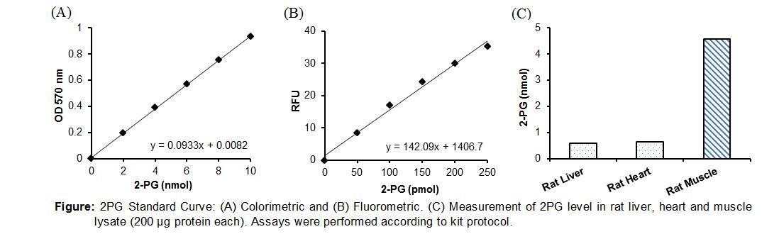2-Phosphoglycerate Colorimetric/Fluorometric Assay Kit